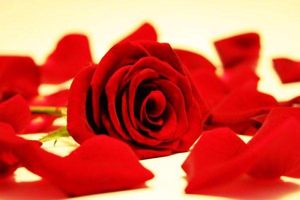 rosa-nomi-quirinale-quirinarie-beppe-grillo-m5s-gino-strada