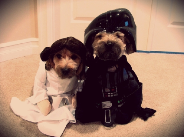 star-wars-cane-dog-tuttacronaca