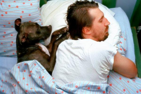 cane-proprietario-tuttacronaca