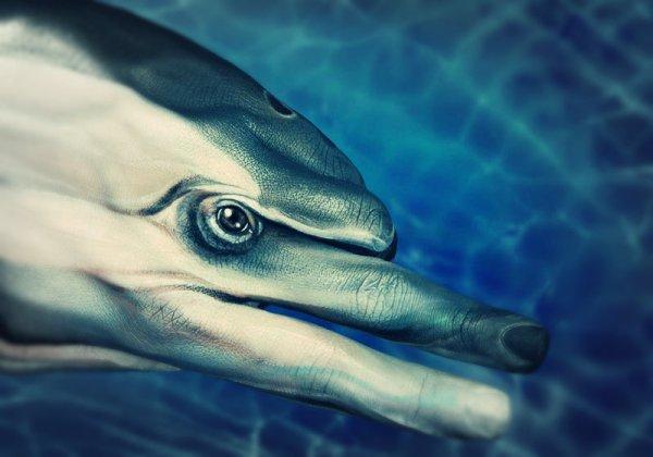 delfino-mani