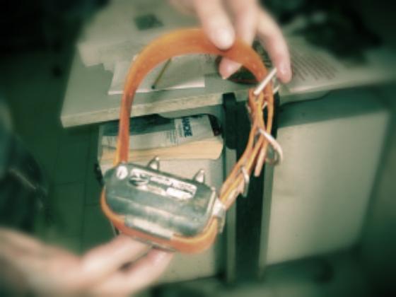 elettrico-collare-tuttacronaca