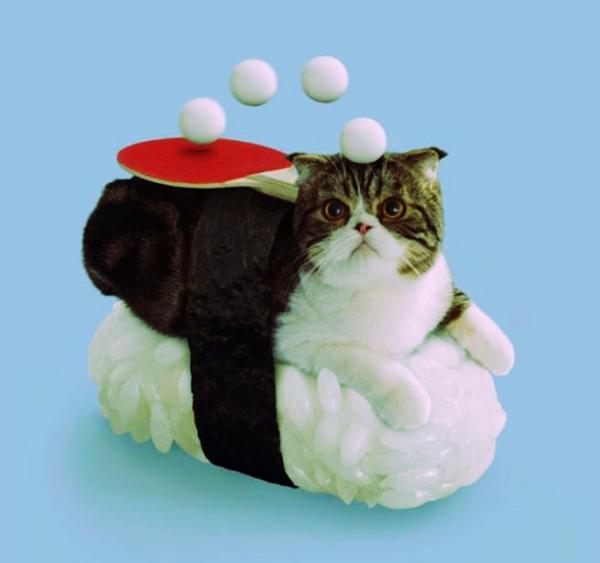 gatto-sushi-ping-pong-tuttacronaca