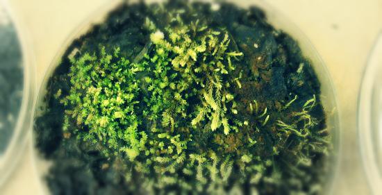 piante_congelate-tuttacronaca