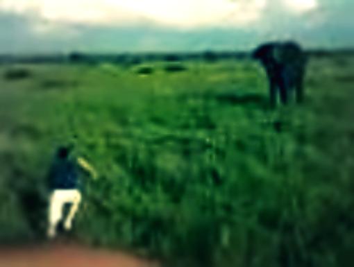 ubriaco-fuga-elefante