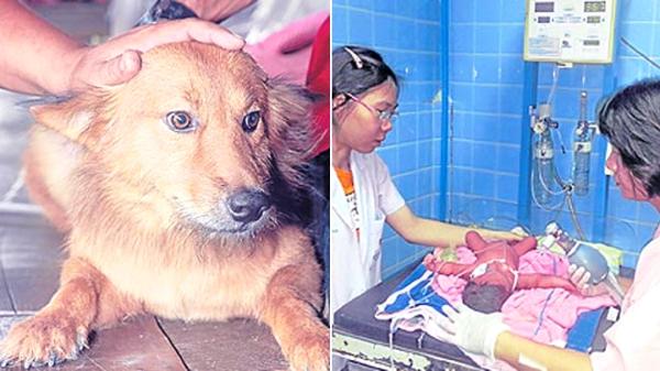 Bangkok-dog-cane-salva-bebè-tuttacronaca