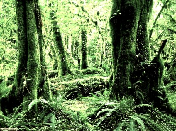 boschi-tuttacronaca-bimbo-scomparso-montagna