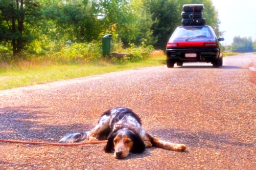cane-abbandono-tuttacronaca