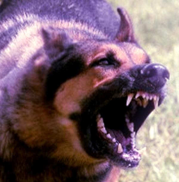 cane-aggressivo-tuttacronaca