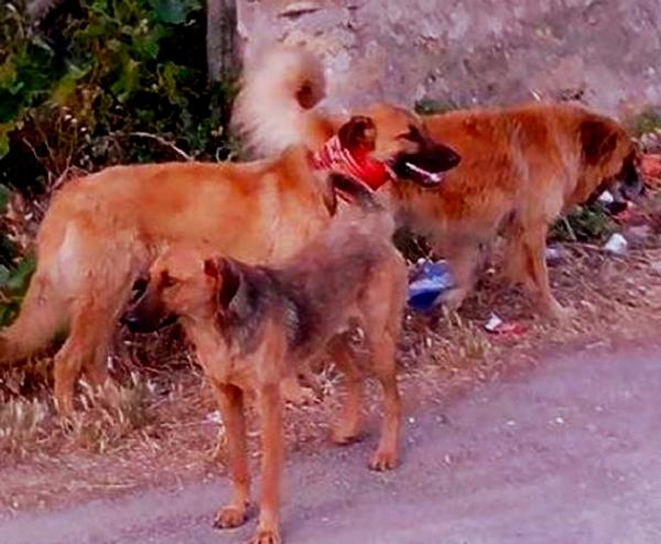 cane-con-tubo-al-collo-tuttacronaca