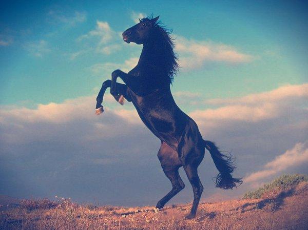 cavallo-frosinone
