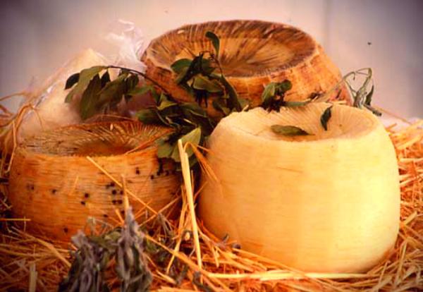 formaggi-in-estinzione-tuttacronaca