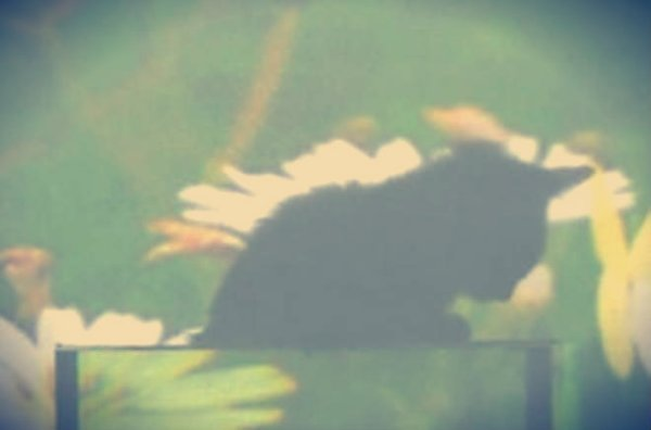 gatto_invisibile