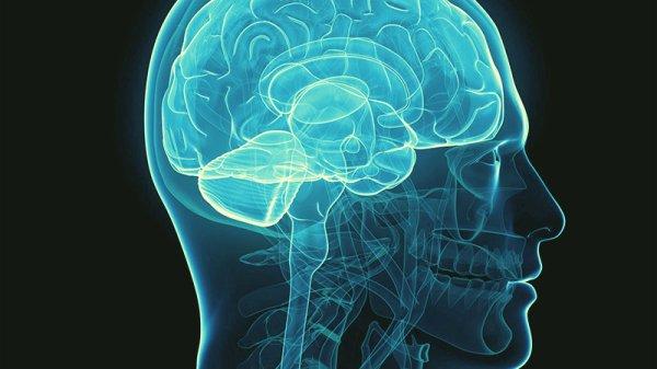 immortalità-cervello