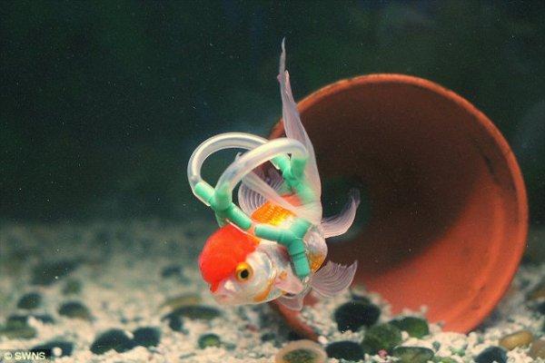 pesce-einstein