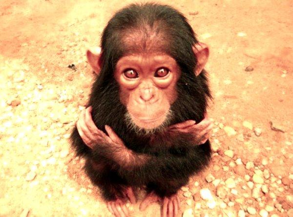 scimmietta-distributore