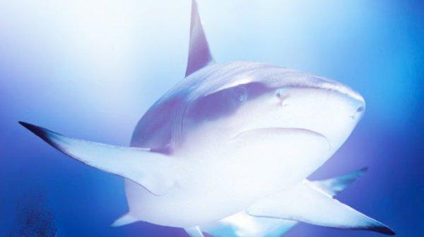 squalo-messico