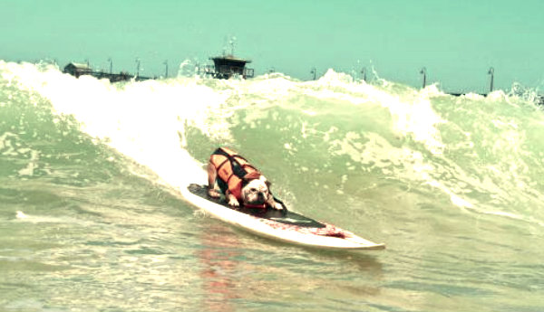 surf-cani