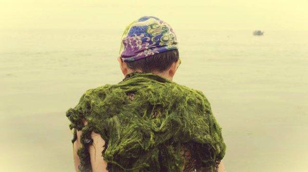 alghe-cina-tuttacronaca
