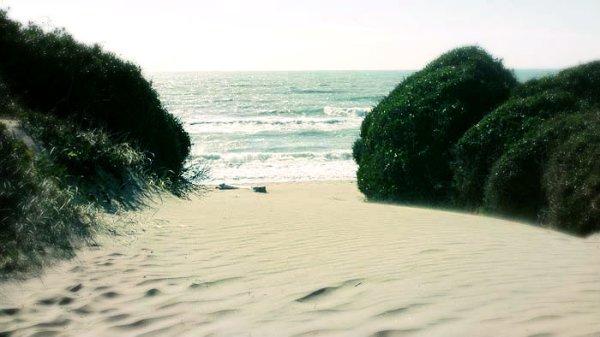 capocotta-litorale-romano-droga-tuttacronaca