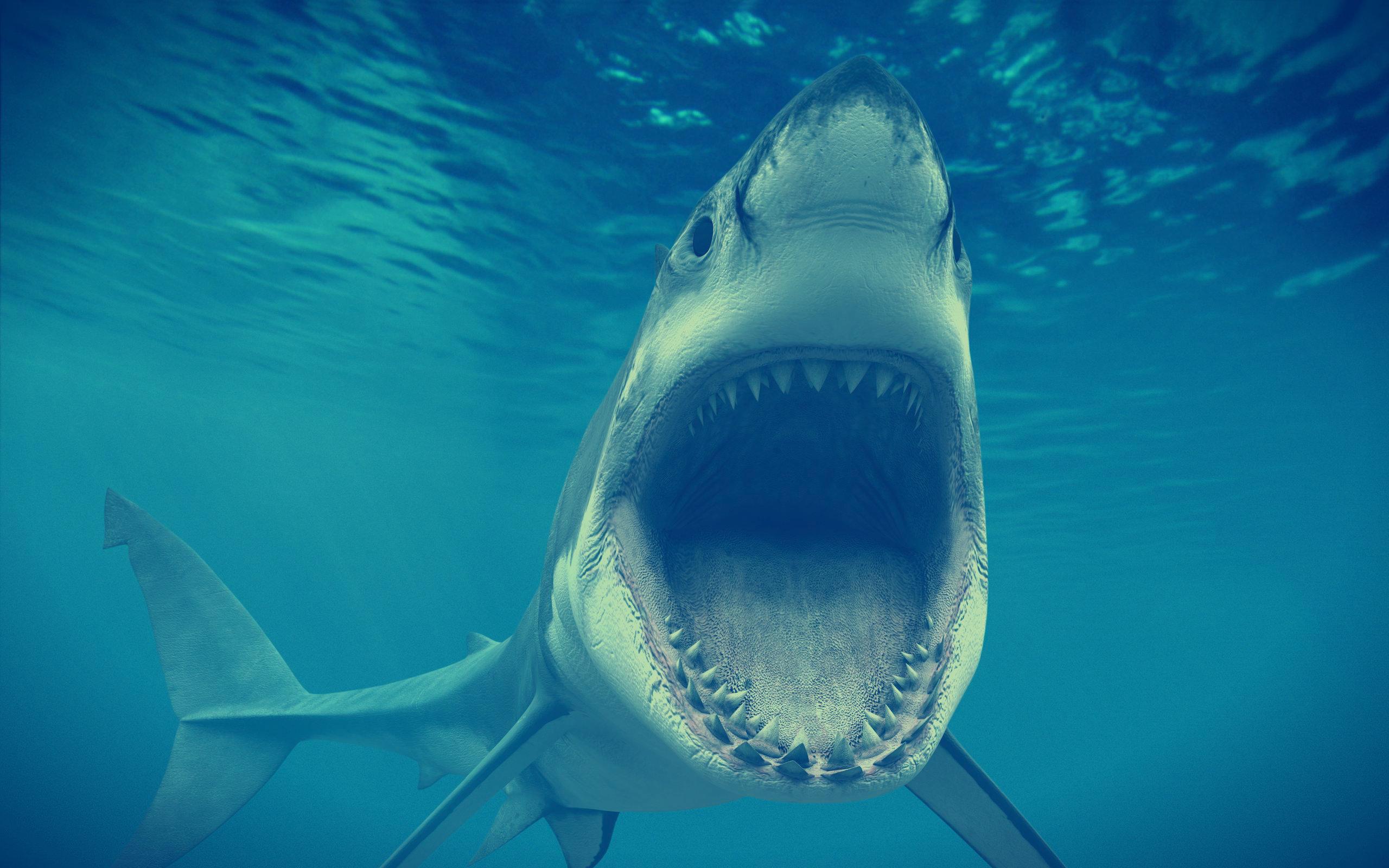 Elicottero Squalo : Terrore in mare ragazza francese uccisa da uno squalo