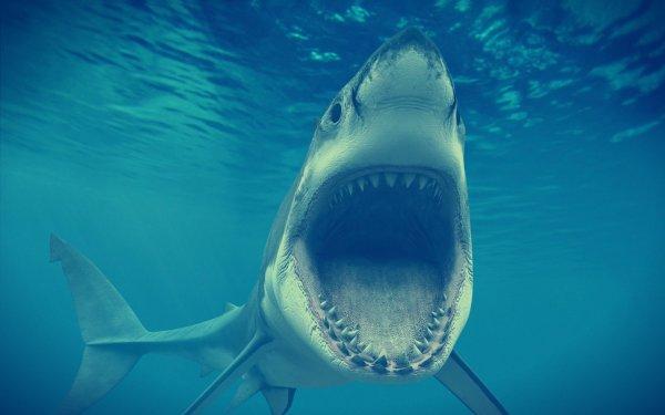 Terrore in mare: ragazza francese uccisa da uno squalo vicino a riva