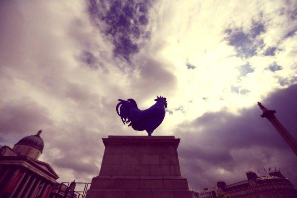 gallo-blu-londra-tuttacronaca