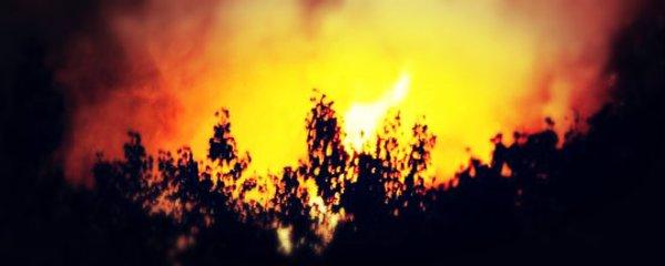 ischia_incendio_tuttacronaca