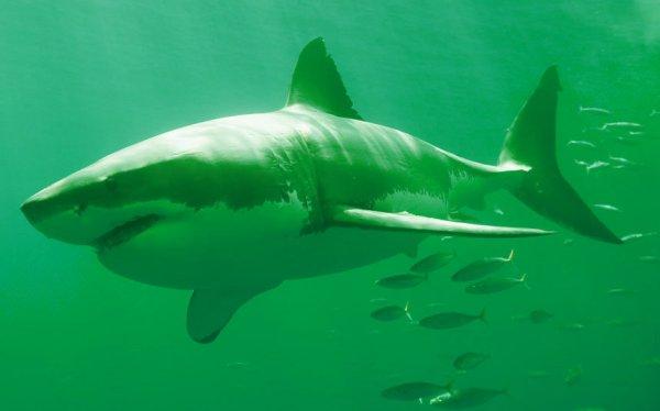 squalo-combattimento-tuttacronaca