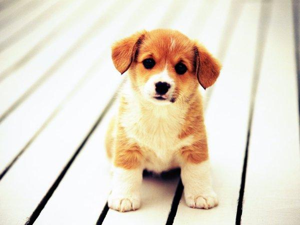 cane-gettato-dall'auto-tuttacronaca