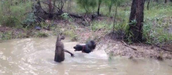 canguro-cane-lotta-tuttacronaca
