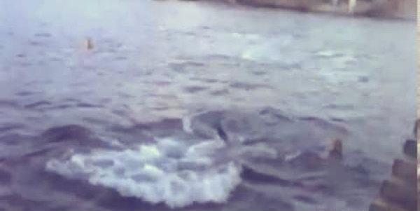 Dusty- il delfino - tuttacronaca
