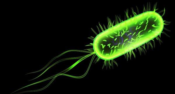 e-coli-streptococci-tuttacronaca