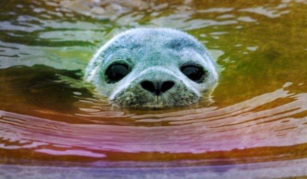 foca-monaca-pryntyl-venezia-tuttacronaca