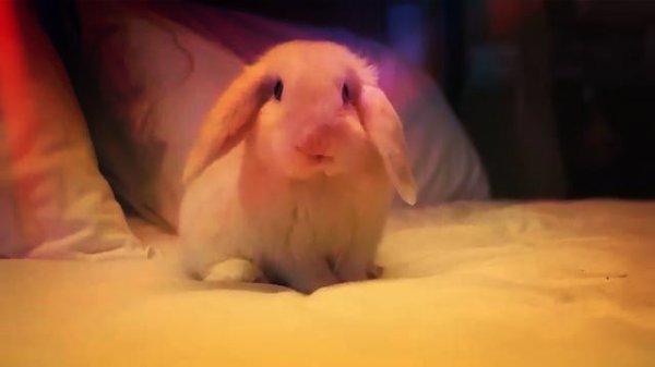 ibis-rabbit-conigli-spot-pubblicitario-tuttacronaca