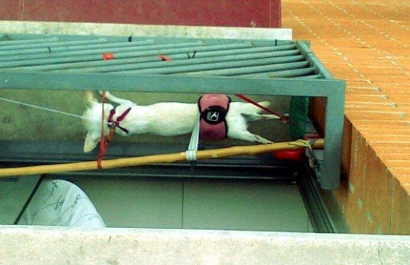 macchina-per-la-tortura-di-cani-barcellona-spagna-tuttacronaca