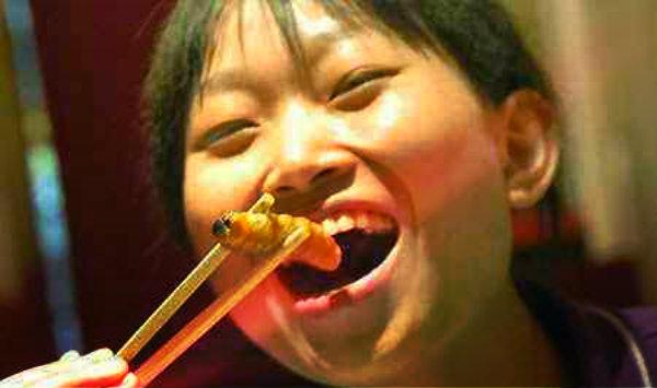 mangiare-vermi-ricette-tuttacronaca
