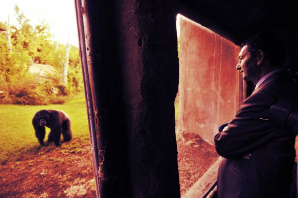 marino e lo scimpanzè-tuttacronaca