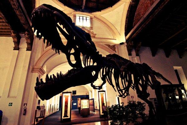 museo-naturale-tuttacronaca-torino-bombola-gas