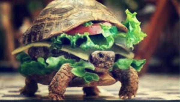 tartaruga-hamburger-tuttacronaca