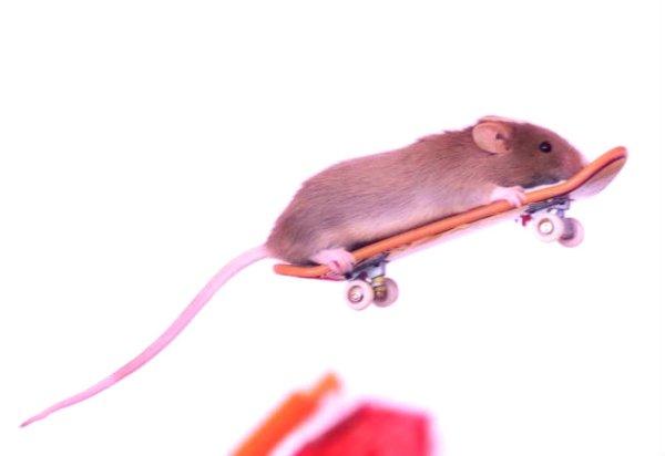 topolino-skateboard-tuttacronaca