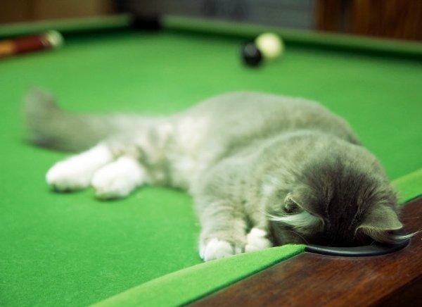 7 giorni-gatto-tuttacronaca