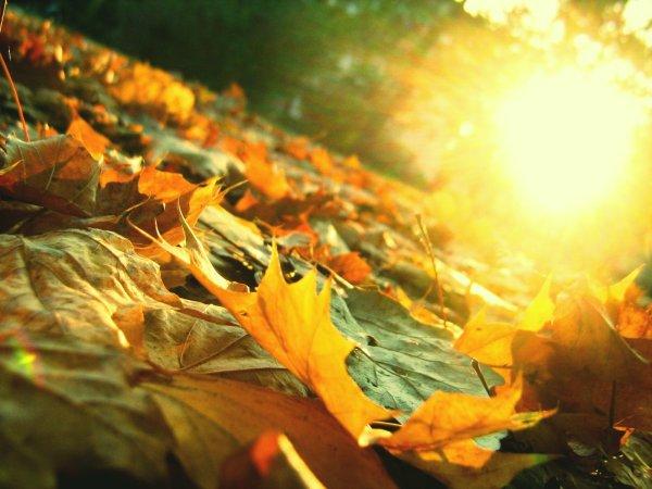 autunno_foglie-7-giorni-tuttacronaca