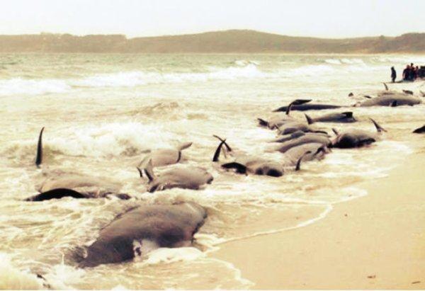 balena-fukushima-giappone-tuttacronaca