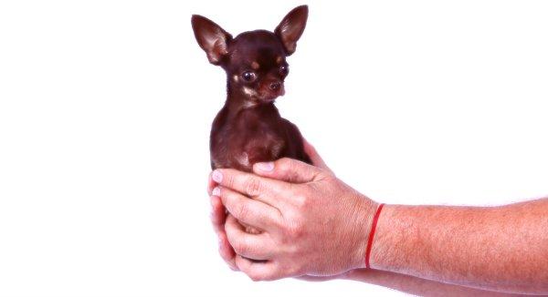 cane-record-tuttacronaca