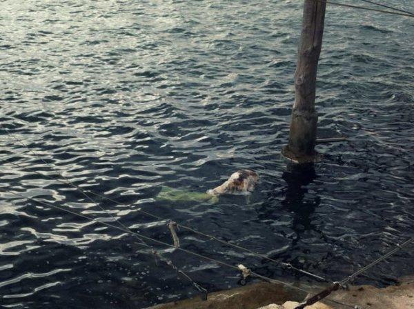cane-sacchetto in testa-chioggia-sottomarina-tuttacronaca