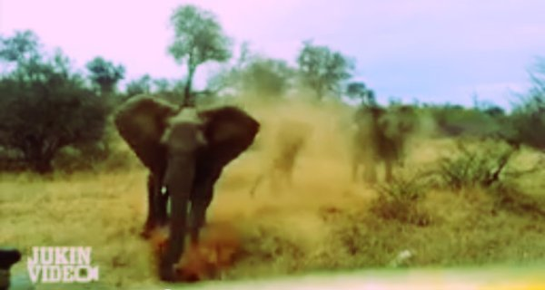 elefante-attacca-jeep-tuttacronaca
