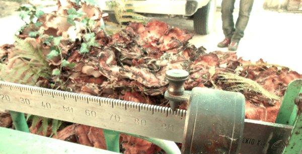 fungo-pergola-tuttacronaca