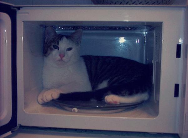 gatto-nel-micronde-tuttacronaca