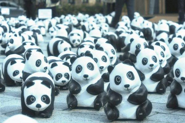 Germania-1600-panda-di-cartapesta-in-piazza-tuttacronaca