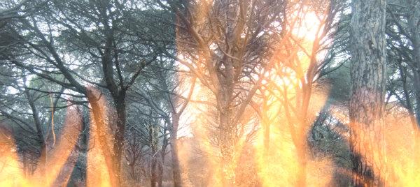 incendio-pineta-tuttacronaca